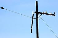 Power pole and kingfisher in Cabot Cruz, Granma, Cuba.