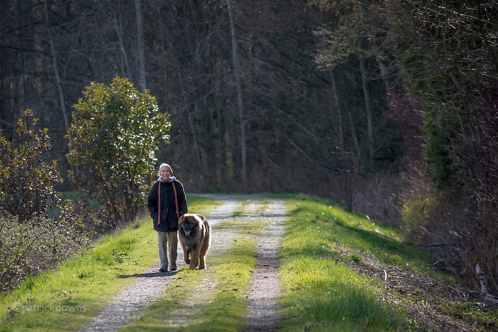 The levee along the Dungeness River is a popular dog walking spot on the Olympic Peninsula in Sequim WA. The level might someday be removed by a consortium of agencies wanting to restore the natural flood plain of the river.
