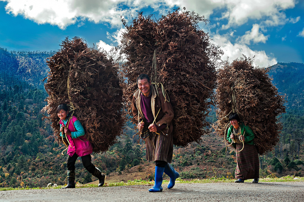A family carrying a huge load of dried ferns to stock up for the winter in eastern Bhutan.