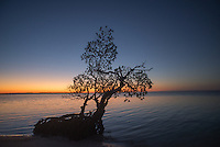 A mangrove tree sits along the shore of Camp Lulu Key in the Everglades Ten Thousand Islands