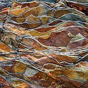Montana: Glacier NP: stone patterns, natural abstracts