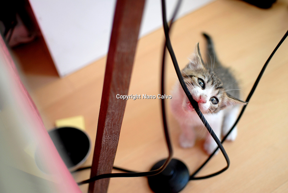 Cute few weeks old kitten biting lamp cable
