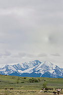 Horse herd, grazing, Crazy Mountains, North of Big Timber, Montana, solar water heater