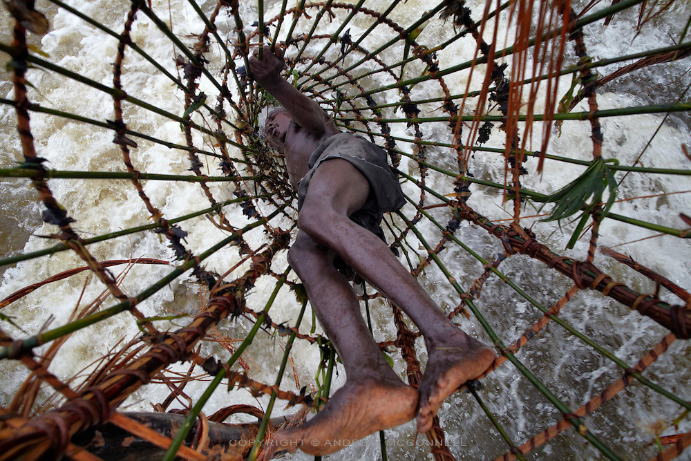 A fisherman checks a basket at Bamanga on the Lualaba River (Upper Congo River), 100km upstream from Kisangani on the Boyoma cataracts, DR Congo. Bamanga is the second cataract on Boyoma Falls (known as Wagenia Falls by the local tribe of the same name) which consists of seven cataracts spread over 100km with the river dropping 60 meters to the last cataract at Kisangani.