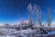 Orion rising in the moonlight over a snowy landscape behind frost-covered bare trees at my house in southern Alberta, on a very cold and frosty -20&deg; C night on January 3, 2017. Illumination is from the waxing crescent Moon. <br /> <br /> This is a stack of 4 images for the ground to smooth noise, and one image for the sky, all 15 seconds at f/2.8 and ISO 1250 with the Nikon D750 and 24mm Sigma lens.