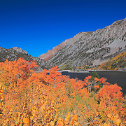 Lake Sabrina Golden Aspens - Fall Color