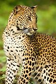 Sri Lanka Wildlife