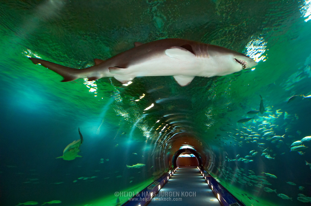 Tunnel guiding through ocean area shark swimming above for Aquarium valencia precio