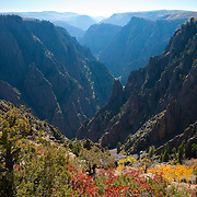 Fall colors line the bluff at Tomichi Point, high above the Gunnison River in Black Canyon of the Gunnison National Park, Colorado. The gorge is the steepest in North America, dropping 2,772 feet (845 meters) at one point. It's called the Black Canyon because it's so steep in places that light doesn't reach the bottom.