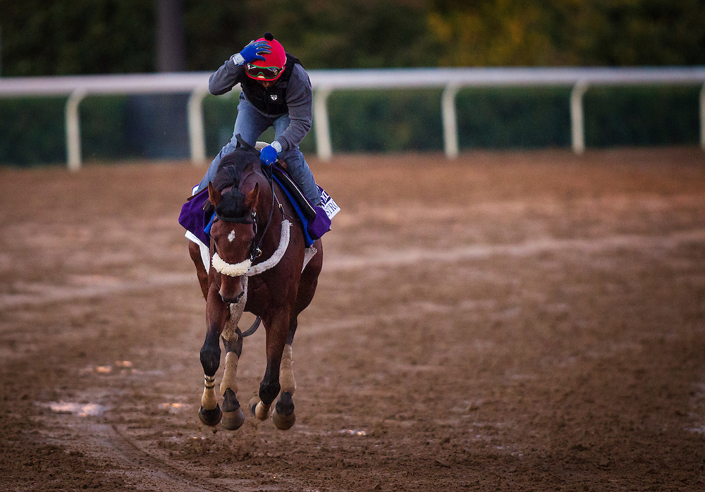 October 29, 2015:   Wicked Strong, trained by James A. Jerkens and owned by Centennial Farms, exercises in preparation for the Las Vegas Breeders' Cup Dirt Mile at Keeneland Race Track in Lexington, Kentucky. Alex Evers/ESW/CSM