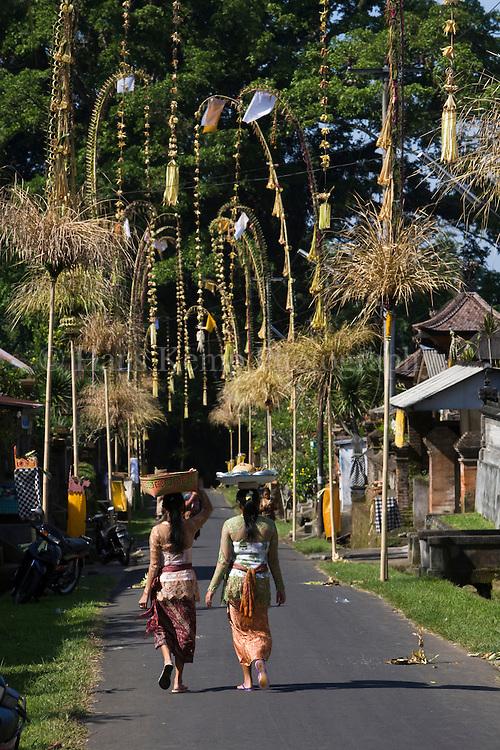 Penjors erected for Galungan along village roads near Ubud, Bali