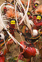 Huli Wigmen from the Tari area, Southern Highlands Province with long white plumes of the Ribbon-tailed Astrapia Bird of Paradise and several other species of Bird of Paradise feathers in their headdresses.  Traditional uses of feathers such as this continues in New Guinea..