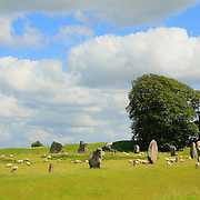 Neolithic Stones And Lone Tree- Avebury, UK