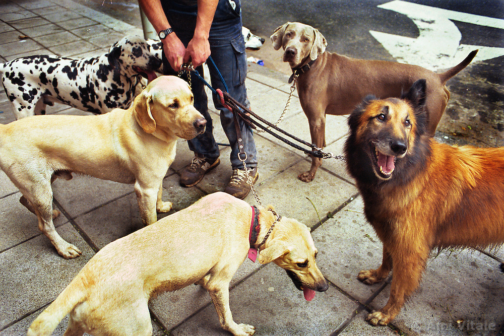 BUENOS AIRES, ARGENTINA: A dog walkers walks dogs on the streets of downtown Buenos Aires. (Photo by Ami Vitale)