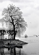 Tree silhouette and ship arriving on lake Konstanz