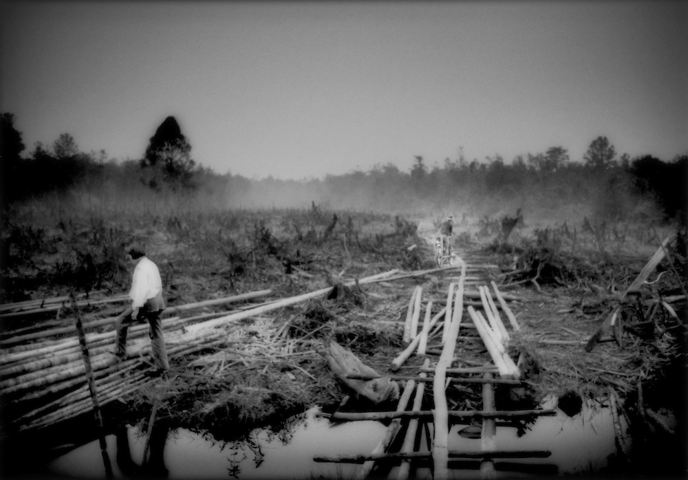 Bugi transmigrants have cleared anemic toothpick forest of secondary trees, West Kalimantan, Indonesian Borneo.  Transmigration was a plan started by the Dutch colonizers but intensified under Suharto to move underprivileged Indonesia from crowden islands, to less densely populated islands like Borneo.