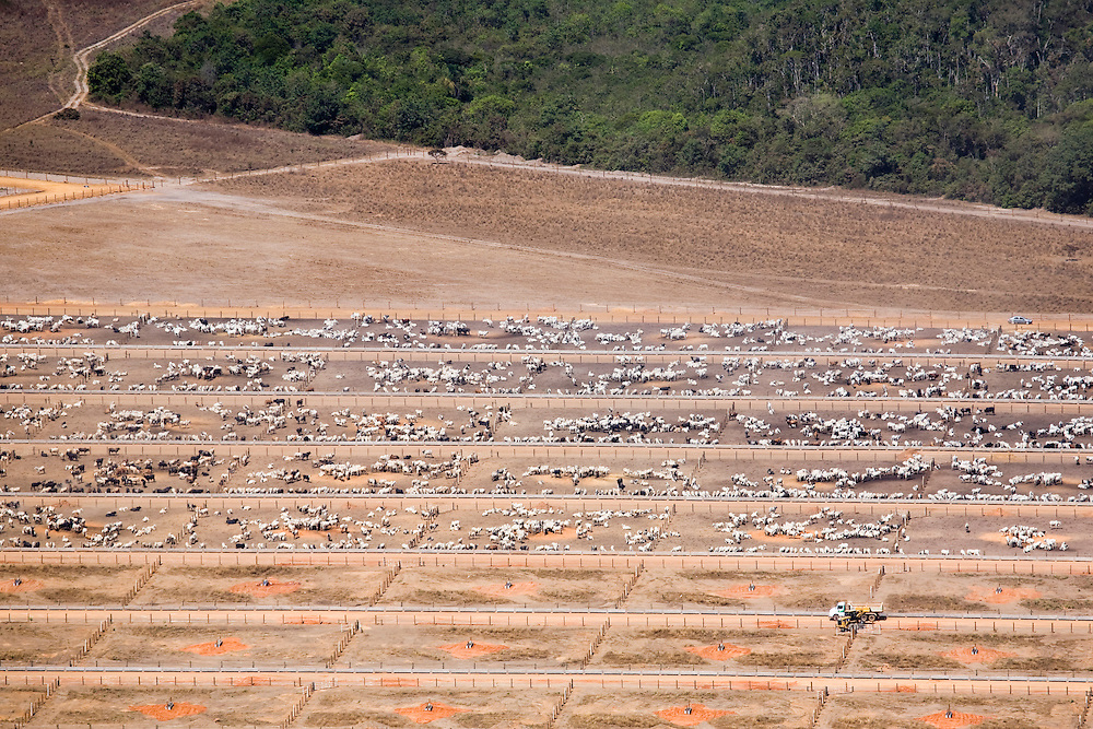 A cattle feeding operation in the Campo Novo Do Parecis region of Mato Grosso, Brazil, August 9, 2008. Daniel Beltra/Greenpeace