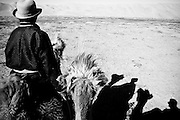 A herdsman leads his and my camel through the Gobi Desert.
