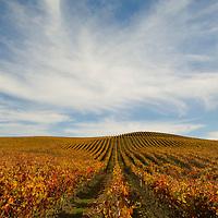 Carneros, Napa County, California