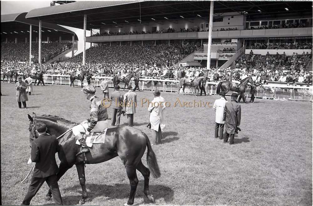 26/06/1965<br /> 06/26/1965<br /> 26 June 1965<br /> Irish Sweeps Derby at the Curragh Race Course, Co. Kildare. The horses on the track before the race. Horses are no.7 Solwezi, (G.W. Robinson up) and left to right in background: 15. &quot;Meadow Court&quot; (L. Piggott up); 14. &quot;Donato&quot; ( A. Breasley up); 13. &quot;Bettered&quot;, (P. Sullivan up); 12.&quot;Jealous&quot; (W. Rickaby up); 11. &quot;Baljour&quot; (J. Purtell up) and 10. &quot;Sierra de Mizas&quot; (J. Mulhall up).