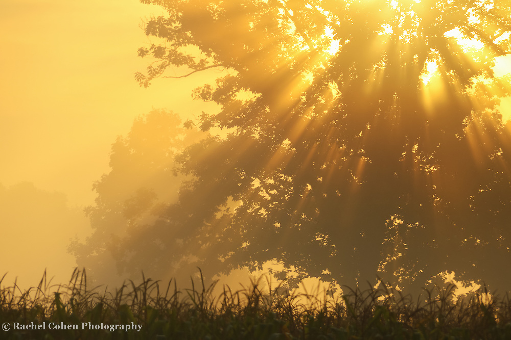 &quot;Golden Blessings&quot;<br /> <br /> Glorious golden sunlight streams through the morning fog, and trees on an early autumn day!