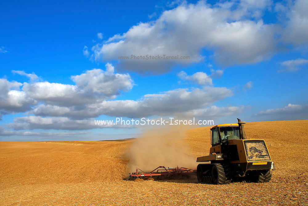Israel, Negev Desert, combine harvester wheat Harvesting, June 2007