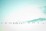 Aves descansan sobre los cables de la electricidad al amanecer. San Juan, Argentina. 23-04-10 (©Alvaro de la Fuente/TRIPLE.cl)