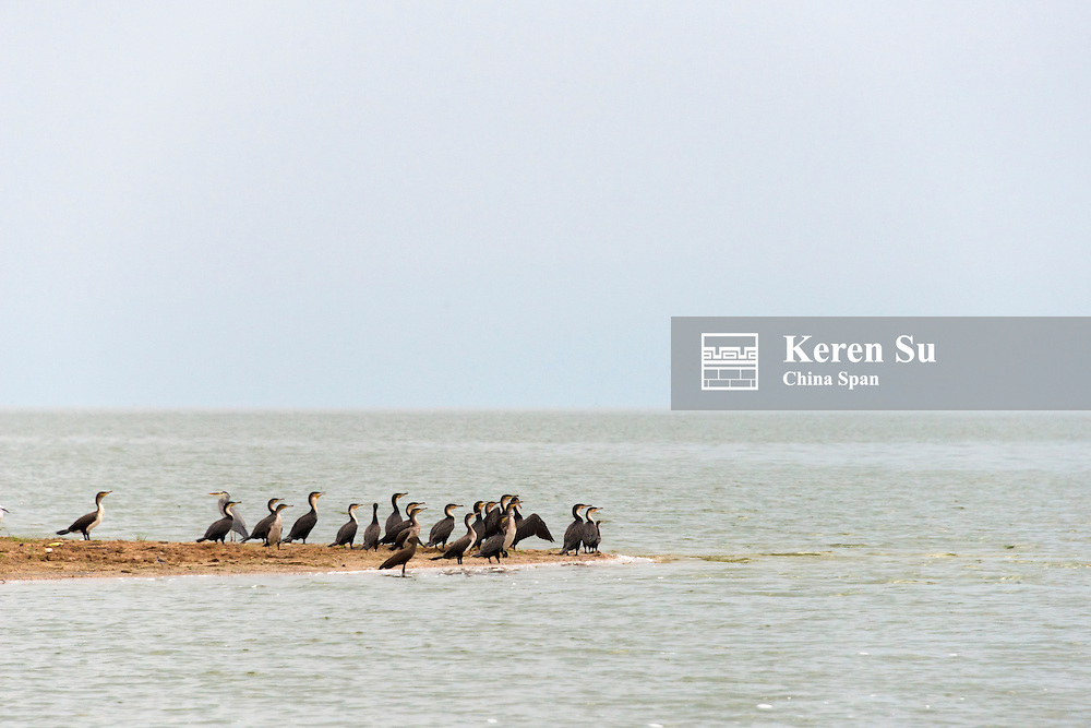 Cormorants, Kazinga Channel, Queen Elizabeth II National Park, Uganda