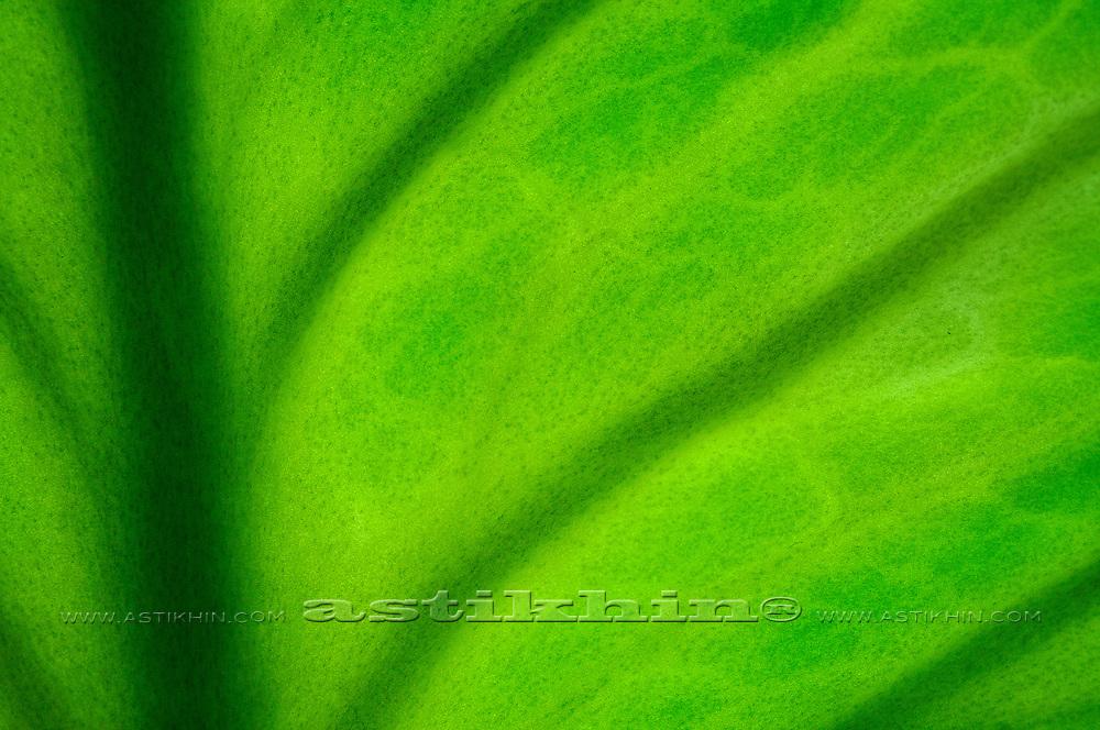 Green leaf close up.