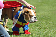 The Three Counties Dog Show 2014