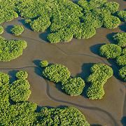 La luz del atardecer baña los manglares de Marismas Nacionales y realza su textura y sus formas extravagantes