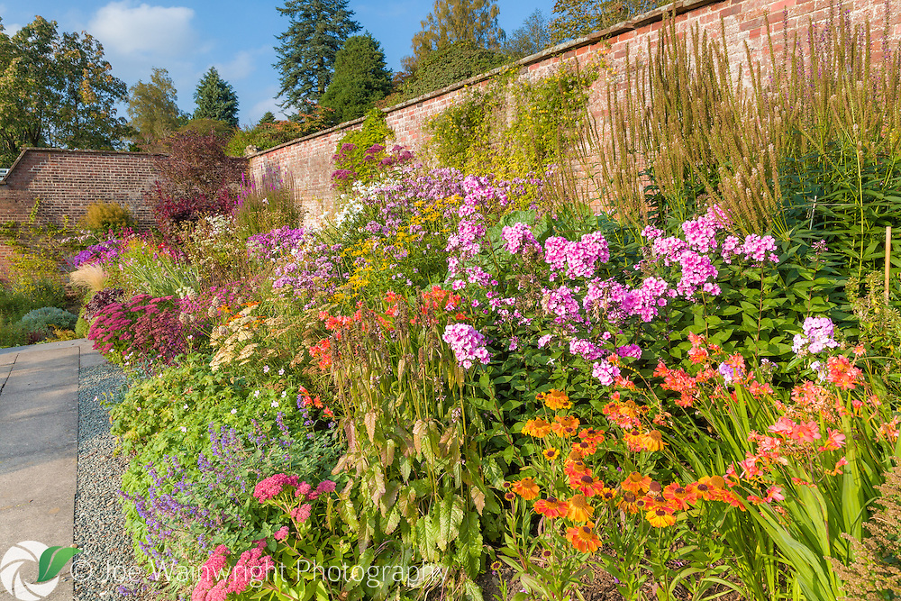 Colouful herbaceous borders in the Walled Garden at Holehird Gardens, Cumbria, photographed in October. Planting includes Heleniums, Sedum, Crocosmia and Phlox.