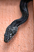 Reptiles, Snakes, Lizards and Amphibians
