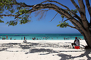 Tree on the beach in Guadalavaca, Holguin, Cuba.