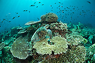 Underwater photos from Sabah, Malaysia