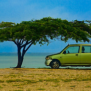 Small car shaded by a divi divi tree on a beach, San Nicolas, Aruba