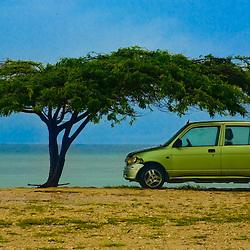 Small car shaded by a divi divi tree on a beach, San Nicolas, Aruba