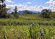 Countryside near Puente de Cabezas, Pinar del Rio, Cuba.