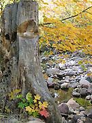 Tree next to dried up creek