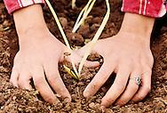 Woman gardening, Oklahoma, <br /> MODEL RELEASED