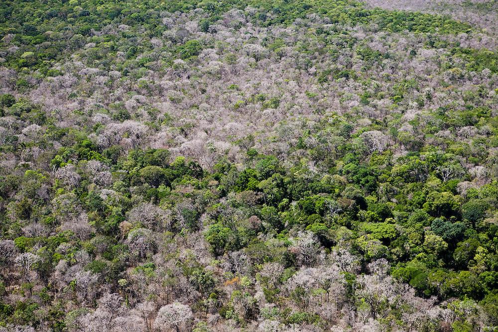 Rainforest near the Fazenda Sao Joaquim (cattle farm), Mato Grosso, Brazil, August 6, 2008..Daniel Beltra/Greenpeace