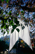 Prayer flag on Bo Tree in the area of the Dalada Maligawa in Kandy.