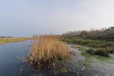 Duinen van Goeree, De Kwade Hoek, Goeree-Overflakkee, Zuid Holland, Netherlands