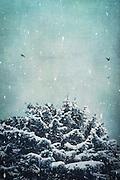 Verschneite Tanne mit Eiszapfen im Schneefall, Wuppertal, deutschland