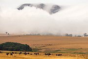 Ostriches dotted the rolling landscape on the Garden Route in South Africa. The hills were massive, but the low swirling cloud made them appear even bigger. I kept pinching myself to keep things real as everything just seemed so &lsquo;surreal&rsquo; &ndash; ostriches as numerous and widespread as sheep in Wales!<br />