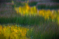 Fall color reflecting in the calm waters of the tarn in Acadia National Park, ME USA