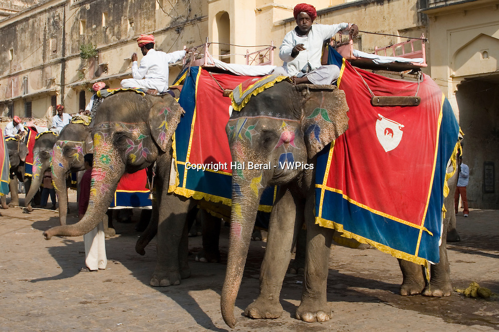 Decorated Elephants waiting to carry visitors to the Amer Fort.Jaipur, India