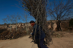 Chinese apple farmer Cui Weiliang, 66, carries firewood to his 'yaodong' or cave home on the top of a mountain in Yichuan county of Yan'an city, Shaanxi Province China, 06 November 2012. Cui makes about 10,000 to 20,000 RMB (2,495 euros) a year from his produce from the 4mu (around 2666 square metres) of land allocated to him. His children have all left the mountains to find work. The 'yadong' or cave dwellings are typical in the plateaus of northern China in Shaanxi Province where many of Yan'an's rural population still live in. They are mostly carved out from the yellow earth of the Loess hillsides and are about seven to eight metres deep with height and width of three metres. Former Communist leader Mao Zedong and his comrades are known to have hid in these cave homes during the civil war between the communists and nationalists in 1936 to 1948 as they battle the Kuomintang forces. China's new leaders slated to take over during the 18th National Congress beginning on 08 November are likely to face mounting pressures to tackle the country's rising income inequalities between urban and rural areas that are often the source of simmering resentment and growing unrests on the grassroot level.