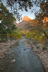 A group of trees frames a mountain at sunset over the Virgin river in Zion National Park, Utah.