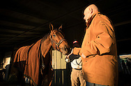 ARCADIA, CA - NOVEMBER 03: Trainer, Richard Mandella feeds champion mare Beholder at the barn before the Breeders' Cup at Santa Anita Park on November 03, 2016 in Arcadia, California. (Photo by Alex Evers/Eclipse Sportswire/Getty Images)